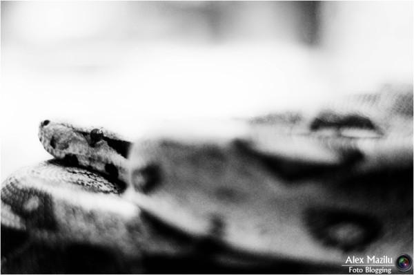 Ouroboros. Anul Şarpelui (III)