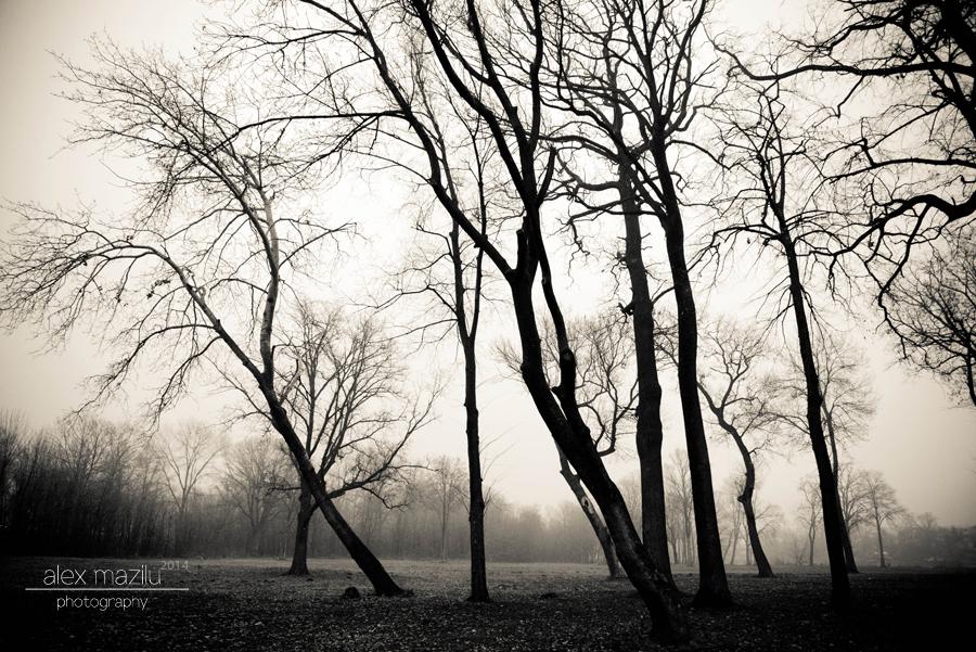 Desolation comes